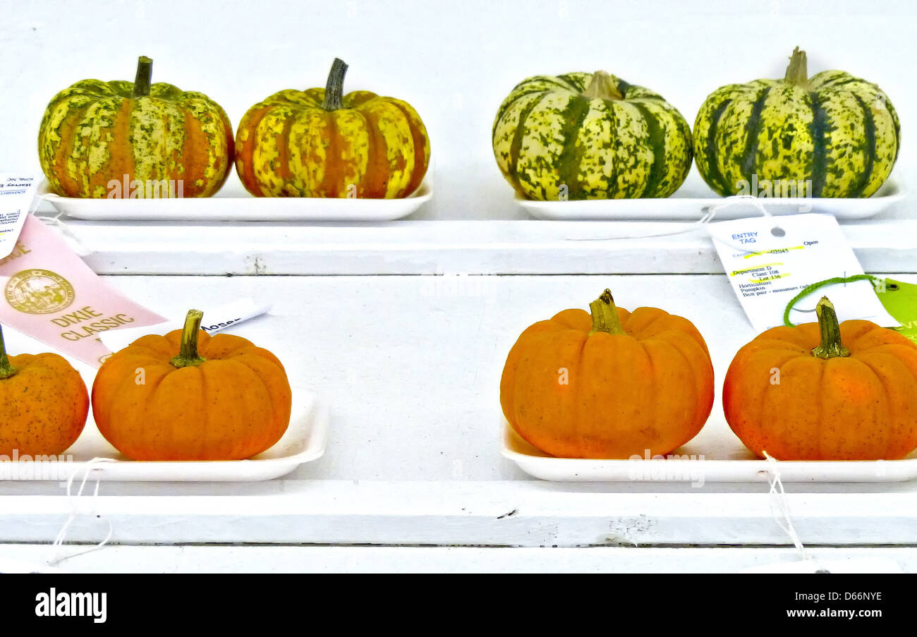 prize wining pumpkins at the Dixie Classic Fair - Stock Image