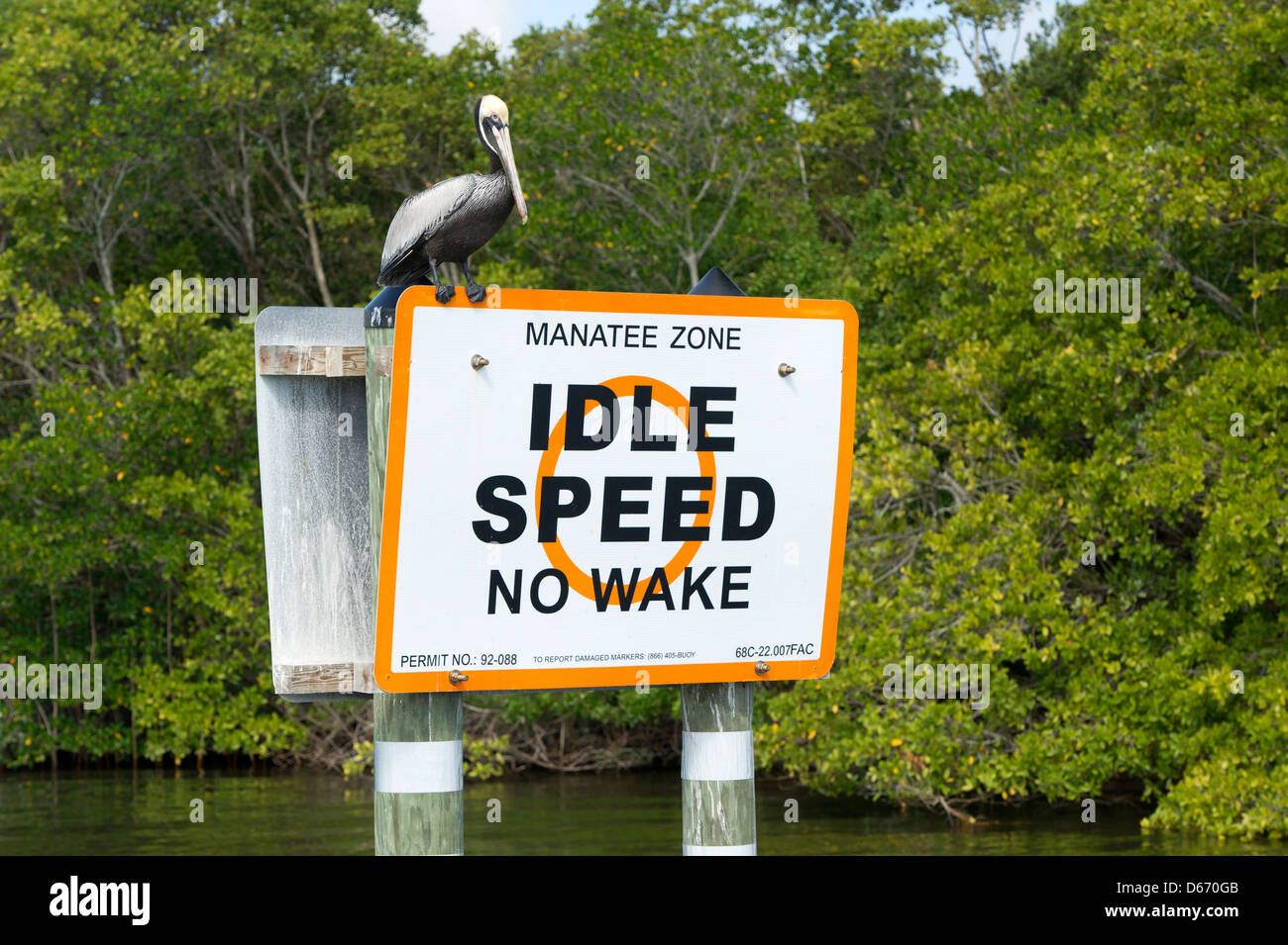 A Brown Pelican (Pelecanus occidentalis) perched on a Manatee Zone sign in the Indian River, Vero Beach, Florida - Stock Image