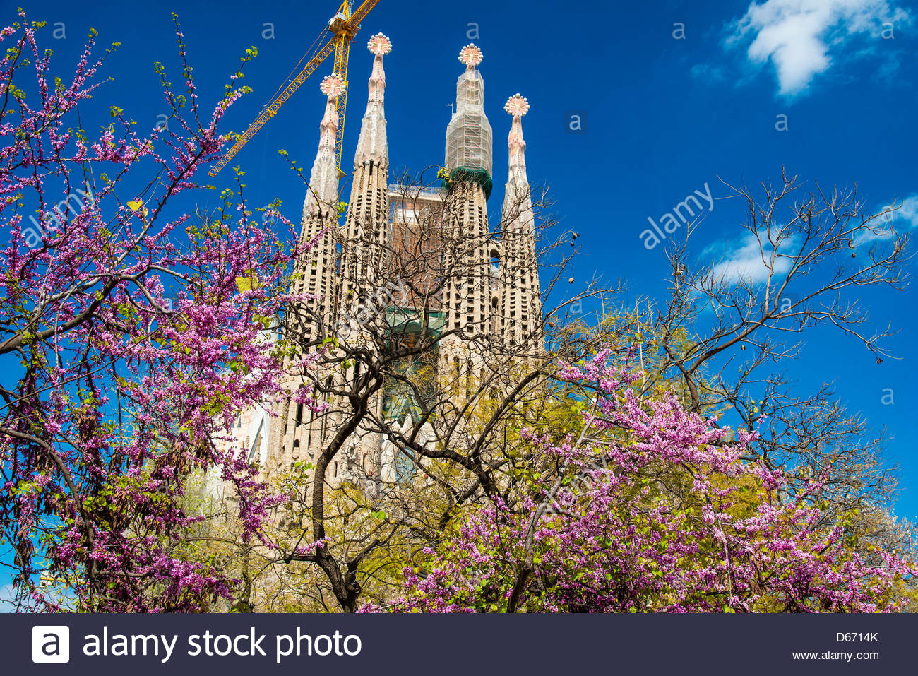Sagrada Familia, Passion Façade (Western side) with blooming trees, Barcelona, Catalonia, Spain - Stock Image