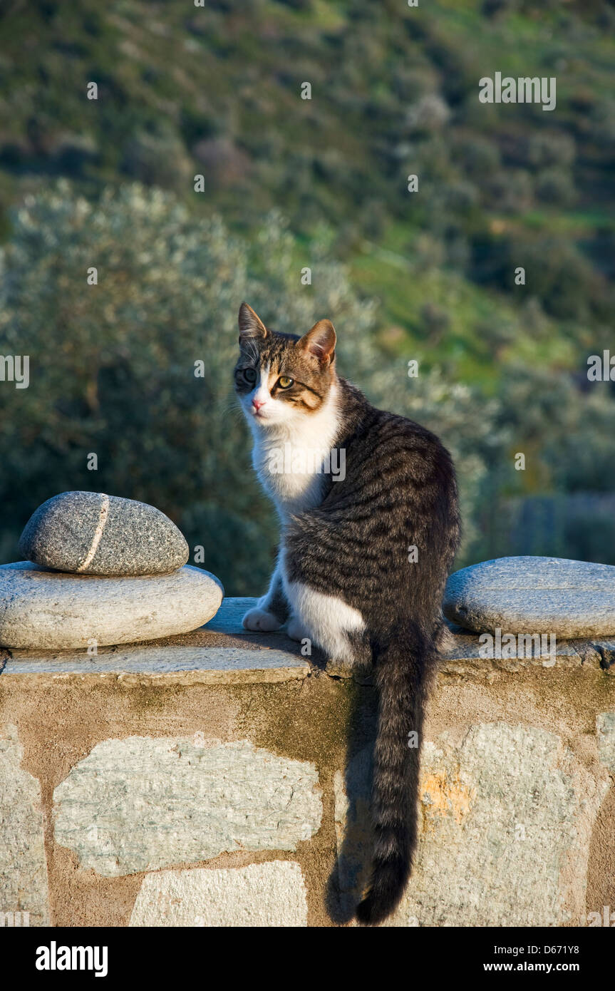Young cat sitting on a wall (Greece) Stock Photo
