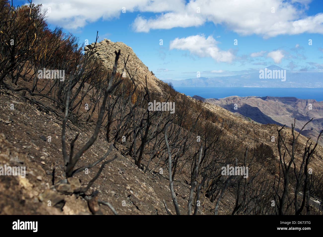 Burnt forest on the island of La Gomera in the background of the ocean and the island of Tenerife - Stock Image