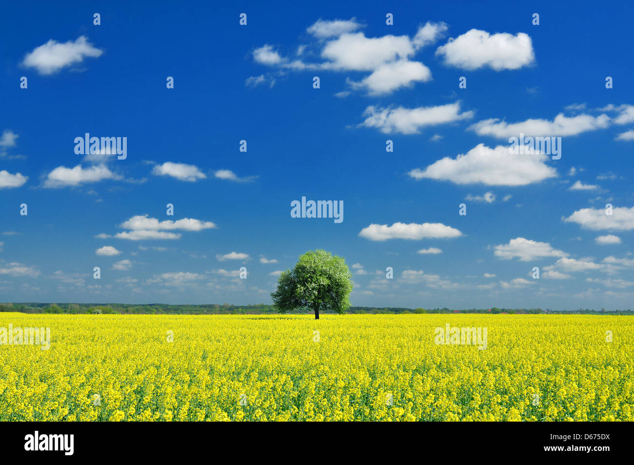 Spring Landscape, Lonely tree and Colza - Stock Image