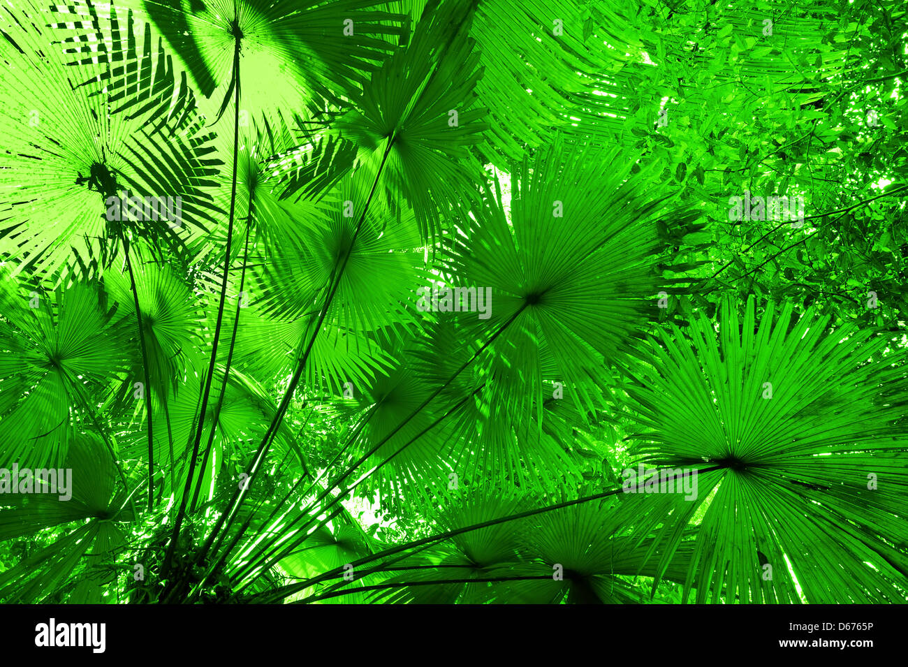 jungle forest background plant leaves in tropical rainforest stock