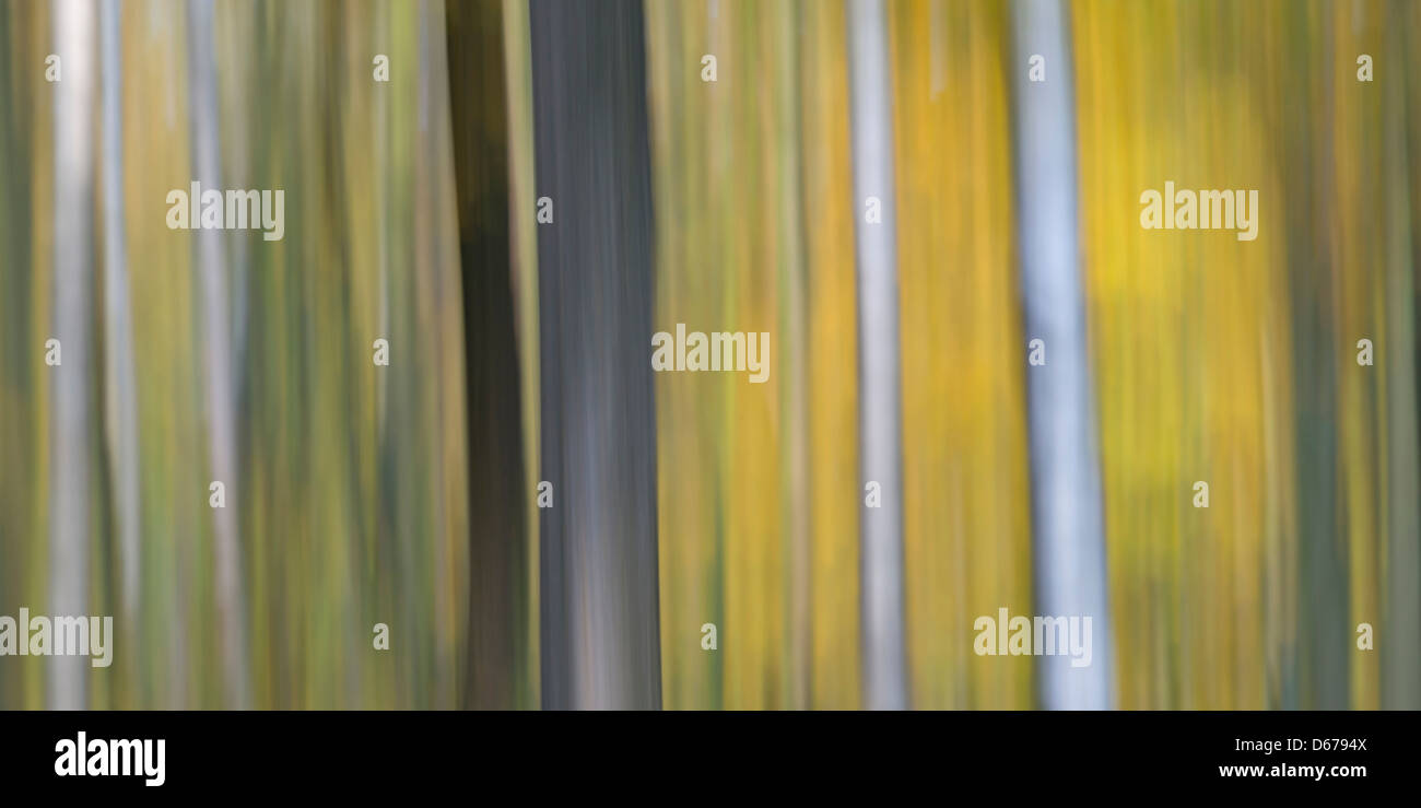abtract tree trunks - Stock Image