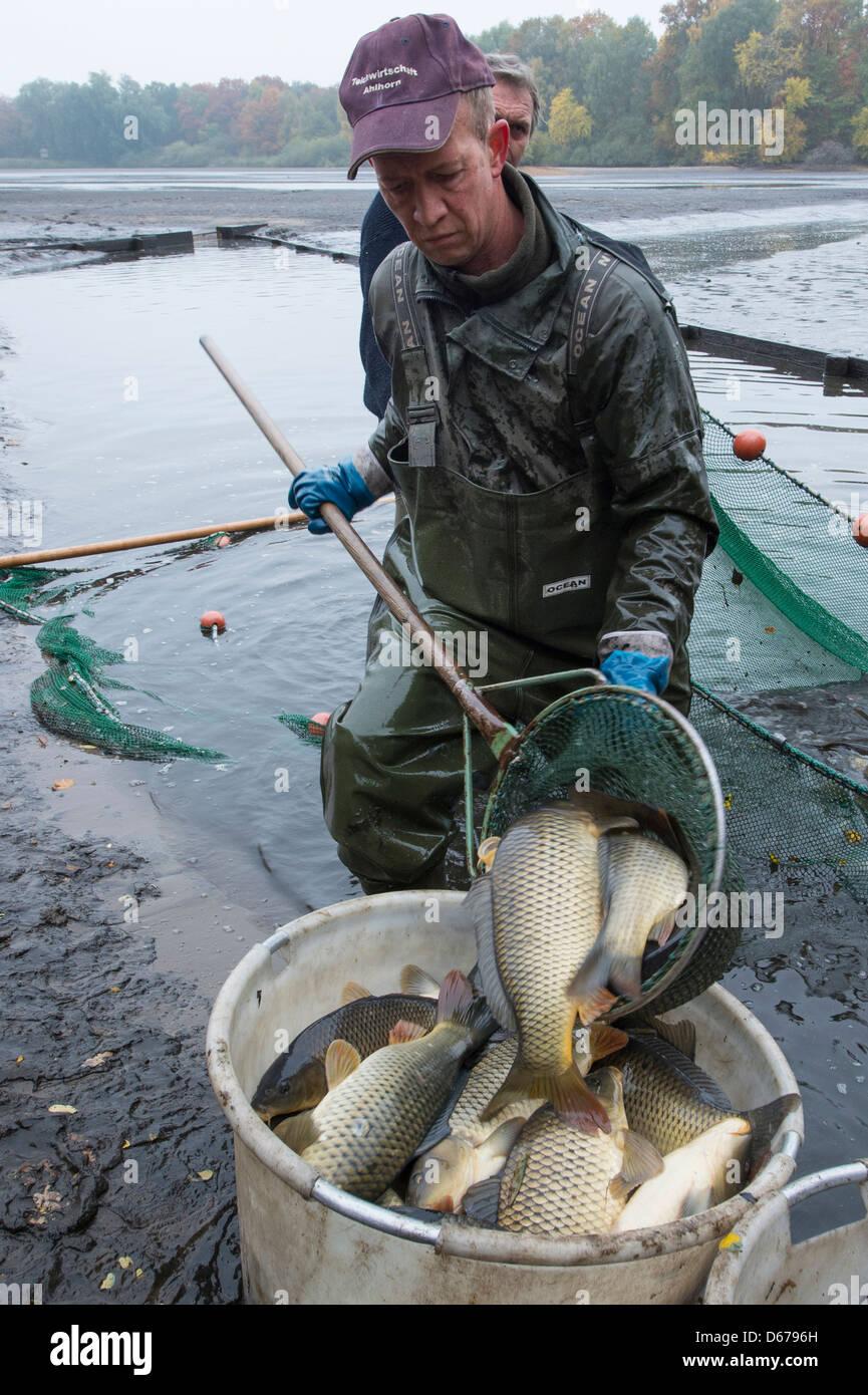 fishermen, ahlhorner fishponds, niedersachsen, germany - Stock Image