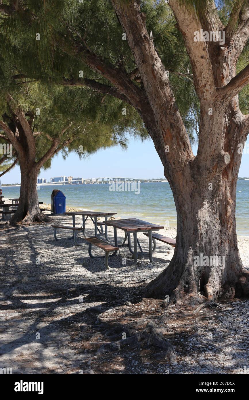 Beau A Picnic Park And Australian Pine Trees On Sanibel Island, Florida, USA