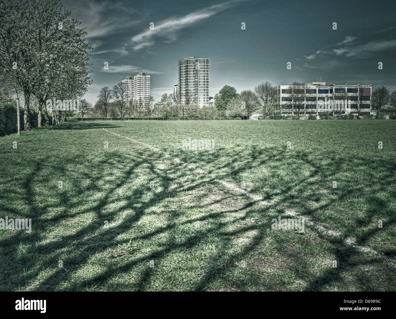 Trees casting shadows on grass in park - Stock Image