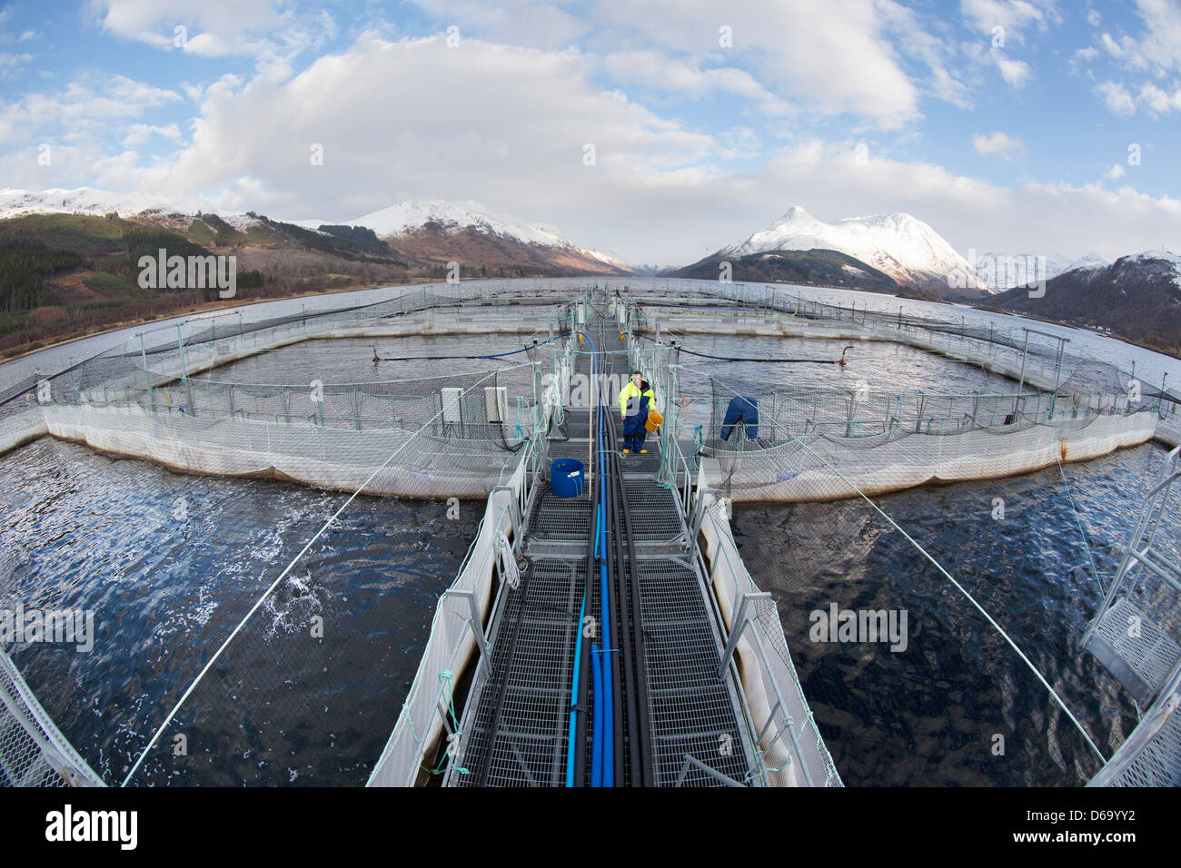 Workers at salmon farm in rural lake - Stock Image