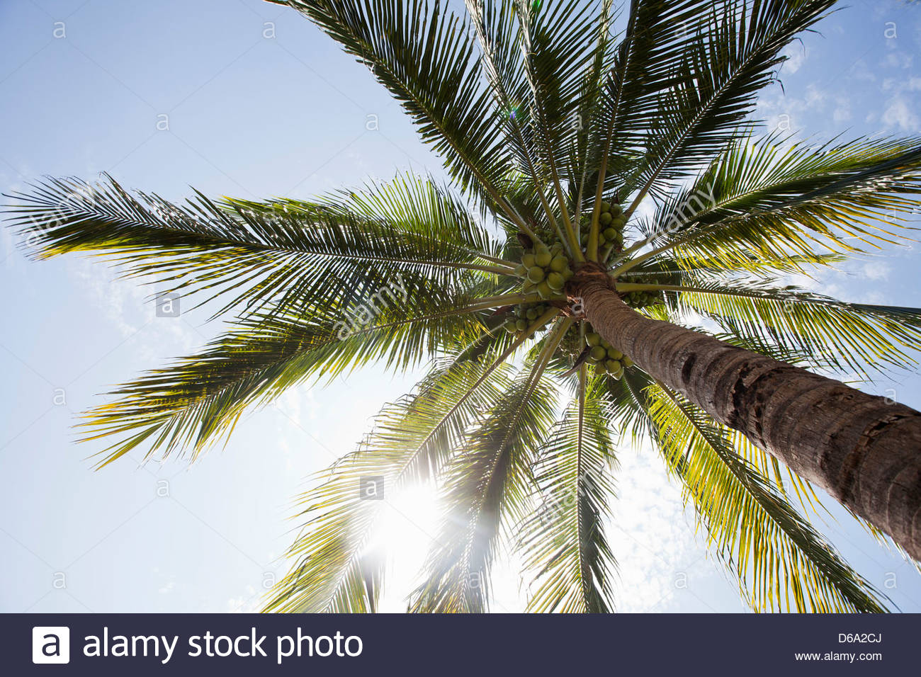 Low angle view of palm tree - Stock Image