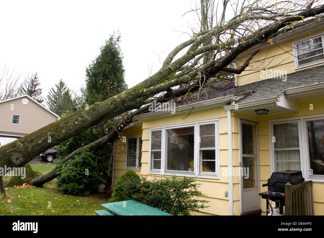 Tree which has fallen on the roof of a house. Caused by Hurricane Sandy. - Stock Image