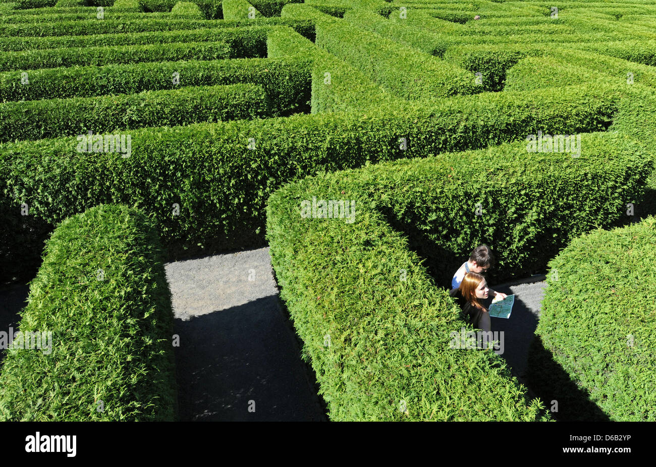 Tourists search for the correct path from the 30,720 possibilities in the hedge maze in Kleinwelka, Germany, 15August - Stock Image