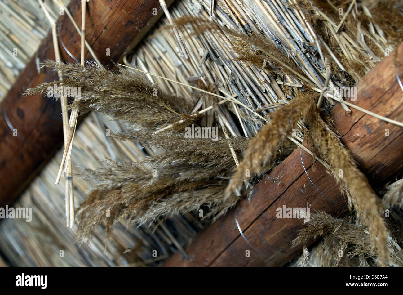 Reeds are pictured on the thatched roof of an old farmhouse in Hoben near Wismar, Germany, 13 August 2012. Many - Stock Image