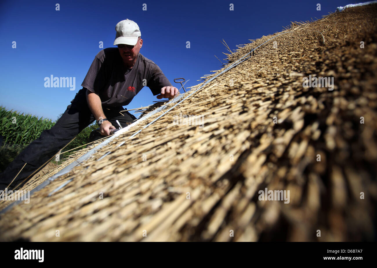 Thatcher Udo Schoenrock works on a thatched roof on an old farmhouse in Hoben near Wismar, Germany, 13 August 2012. - Stock Image