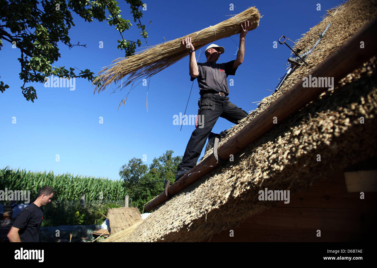 Thatchers Udo Schoenrock (R) and Mathias Hahn install a thatched roof on an old farmhouse in Hoben near Wismar, - Stock Image