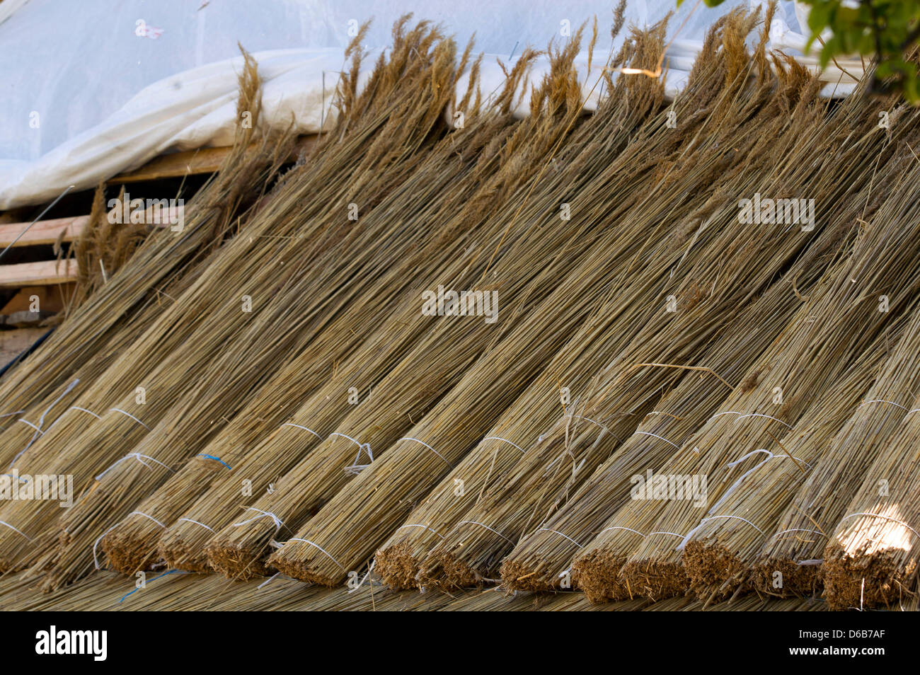 Rolls of reeds for a thatched roof sit on thge roof of an old farmhouse in Hoben near Wismar, Germany, 13 August - Stock Image
