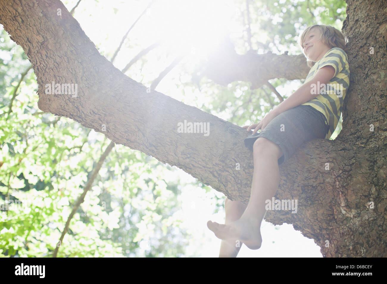 Smiling boy sitting in tree - Stock Image