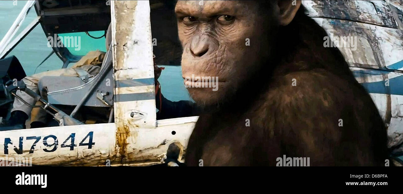 Ape Rise Of The Planet Of The Apes 2011 Stock Photo Alamy