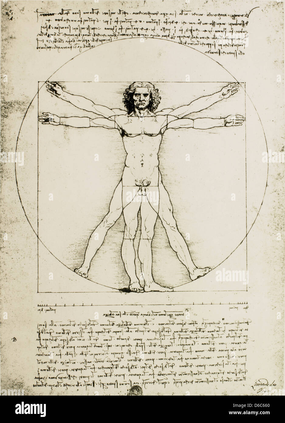 vitruvian man study of proportions leonardo da vinci drawing stock photo 55587336 alamy. Black Bedroom Furniture Sets. Home Design Ideas