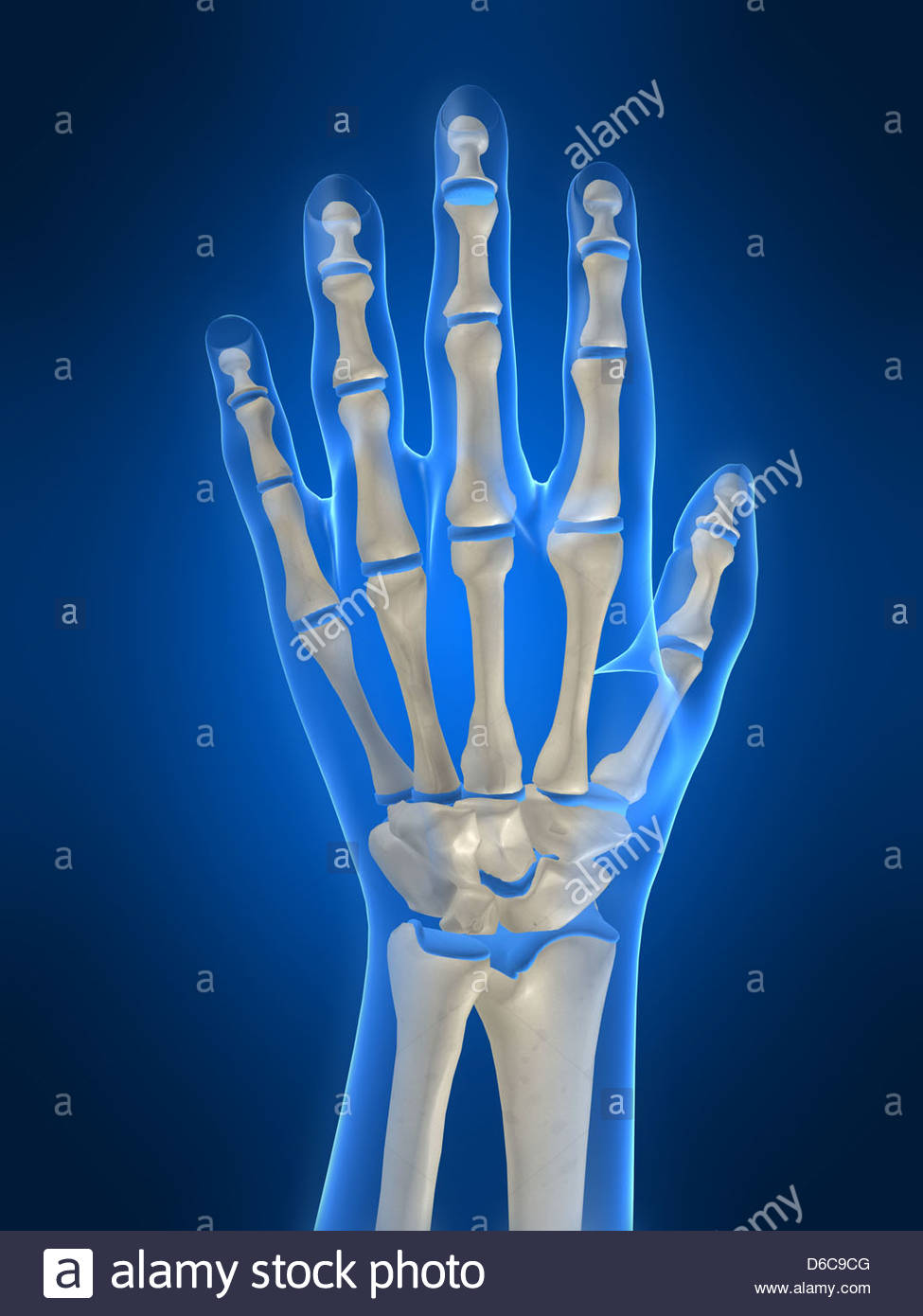 finger,hand,skeleton,medical illustrations - Stock Image