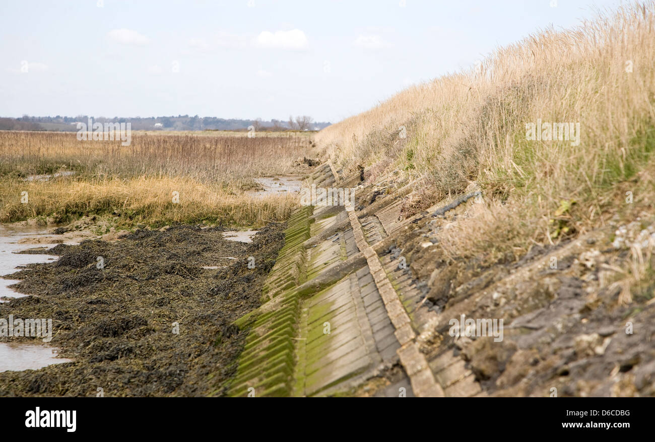 Reinforced flood defence bank on the River Deben, Sutton, England - Stock Image