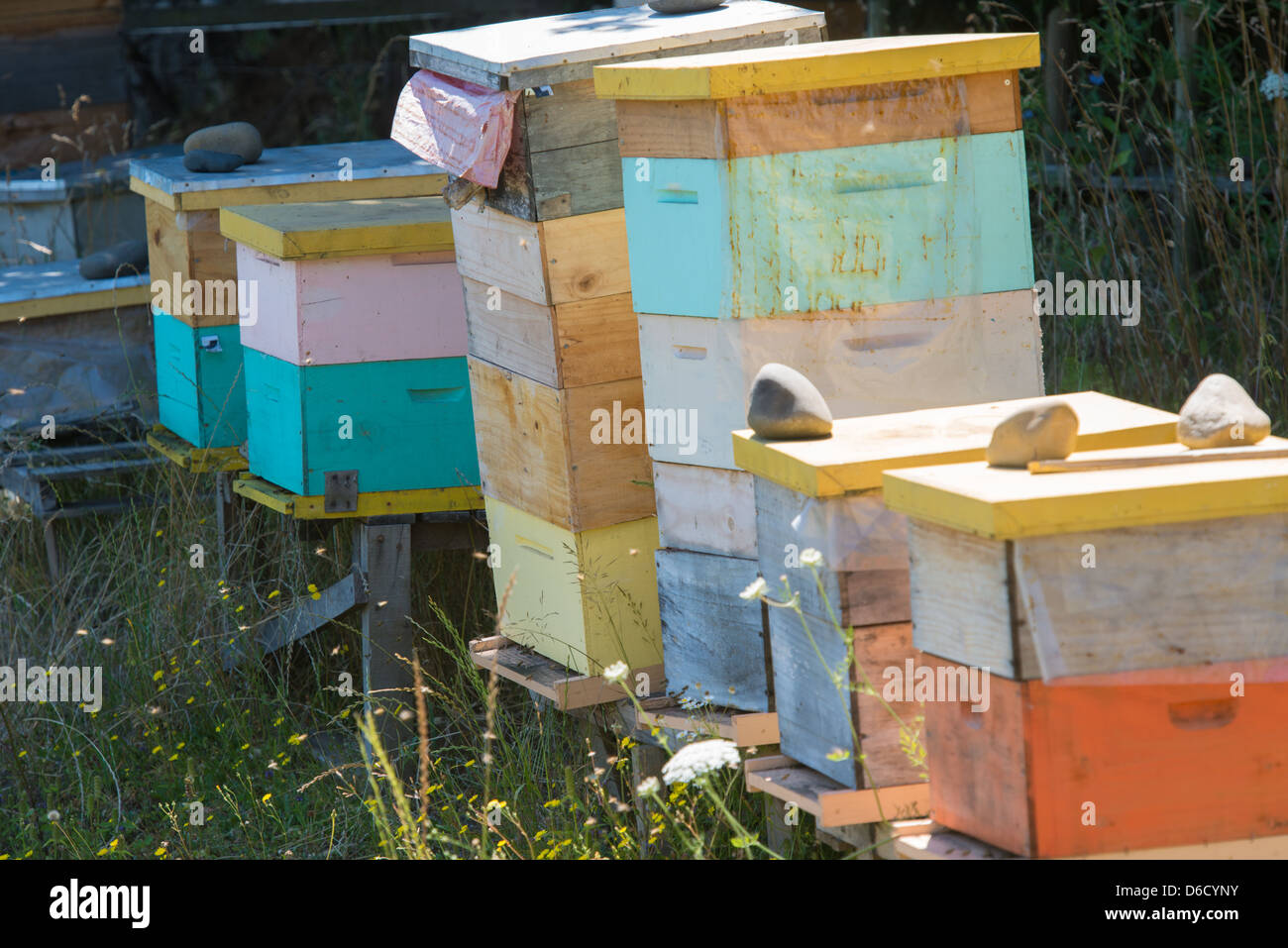 Apiary on hazelnut plantation in Temuco, Chile - Stock Image