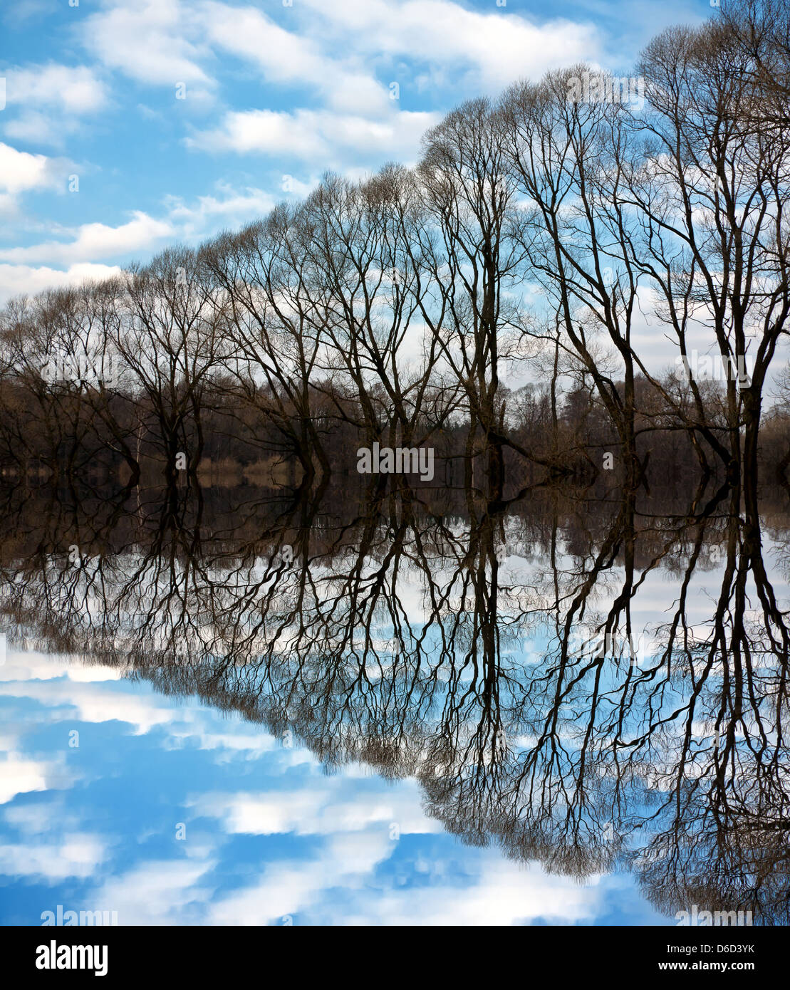 Line of trees on a riverbank - Stock Image