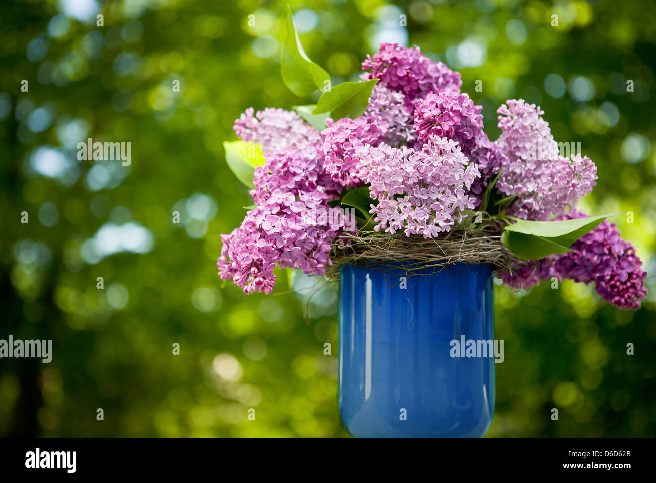 bunch of lilac flowers - Stock Image