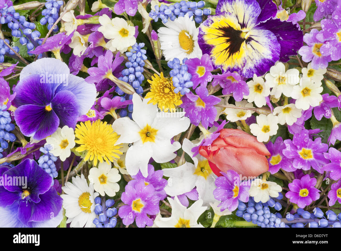 Springs flowers after the rain background stock photo 55610684 alamy springs flowers after the rain background mightylinksfo