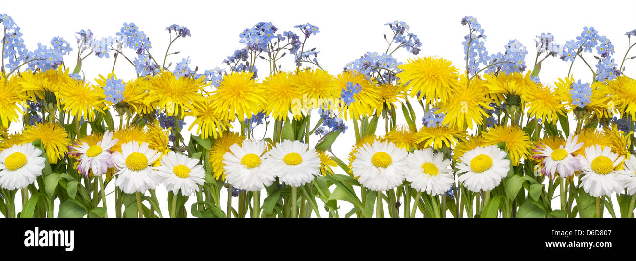 Real Spring Flowers Border Stock Photo 55610695 Alamy