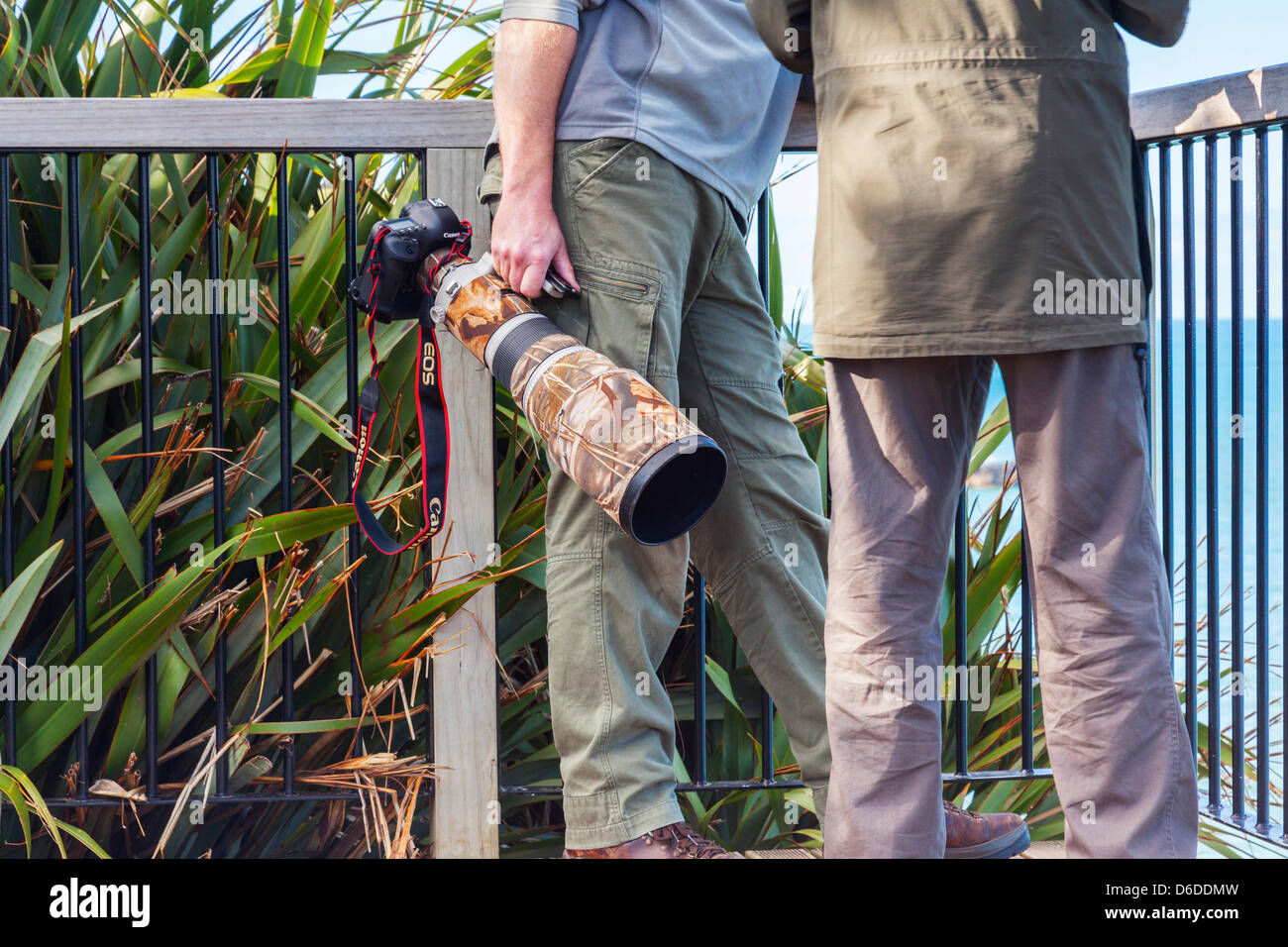 Wildlife photographer with Canon camera and enormous lens with camouflage wrap. - Stock Image