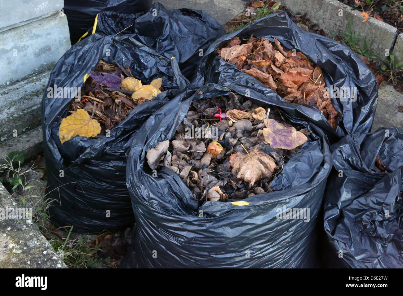 Plastic sacks of Leaves to make Leafmould In Garden Stock Photo