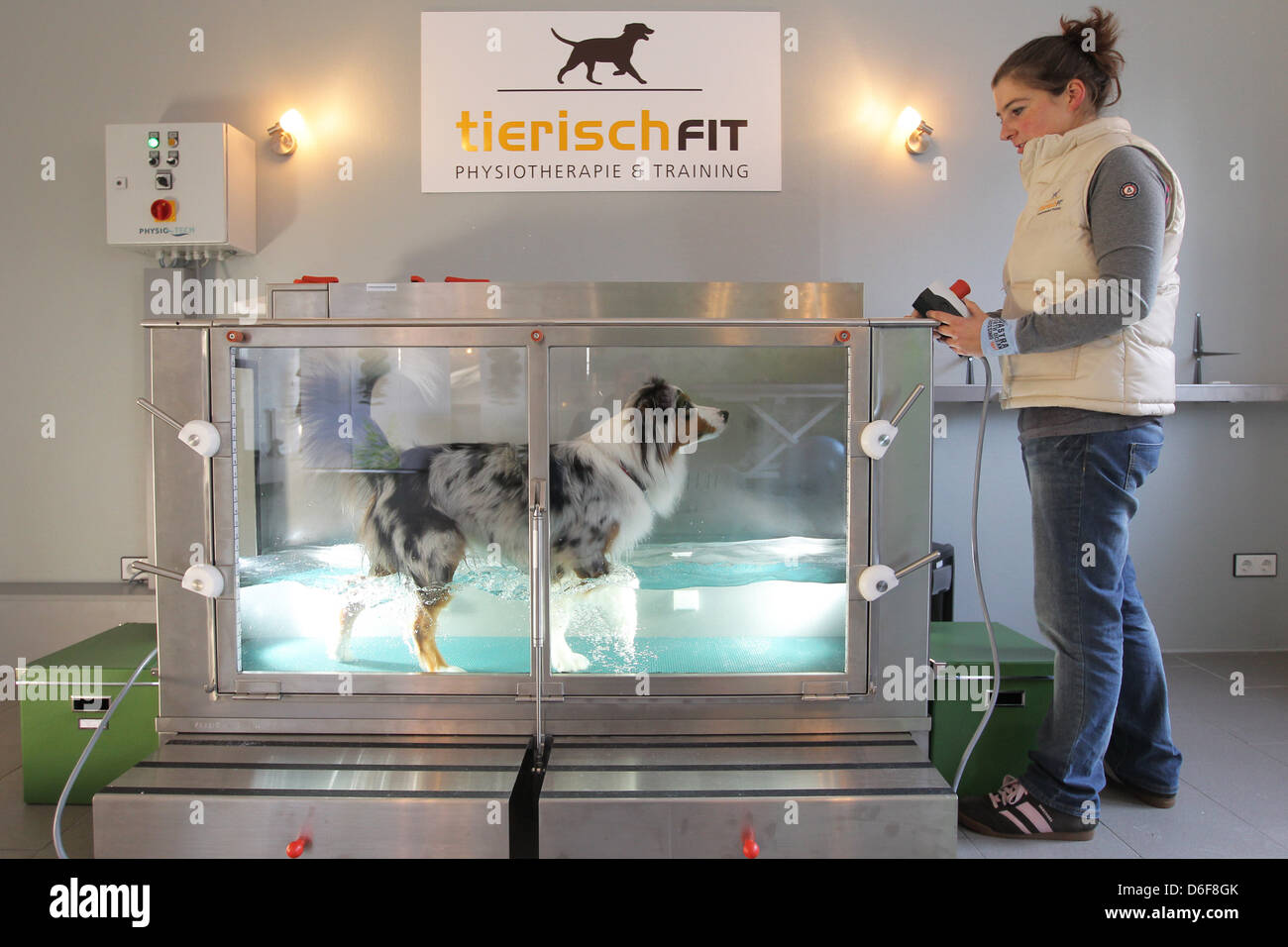 Wees, Germany, an Australian Shepherd dog in the water aerobics in the physiotherapy practice Beastly fit Stock Photo
