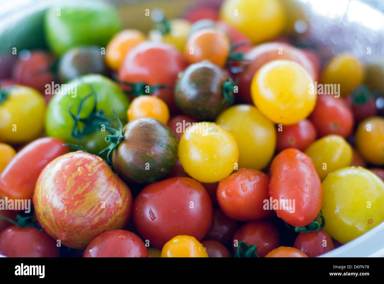 Tomato mixed Varieties / yellow,green,striped - Stock Image
