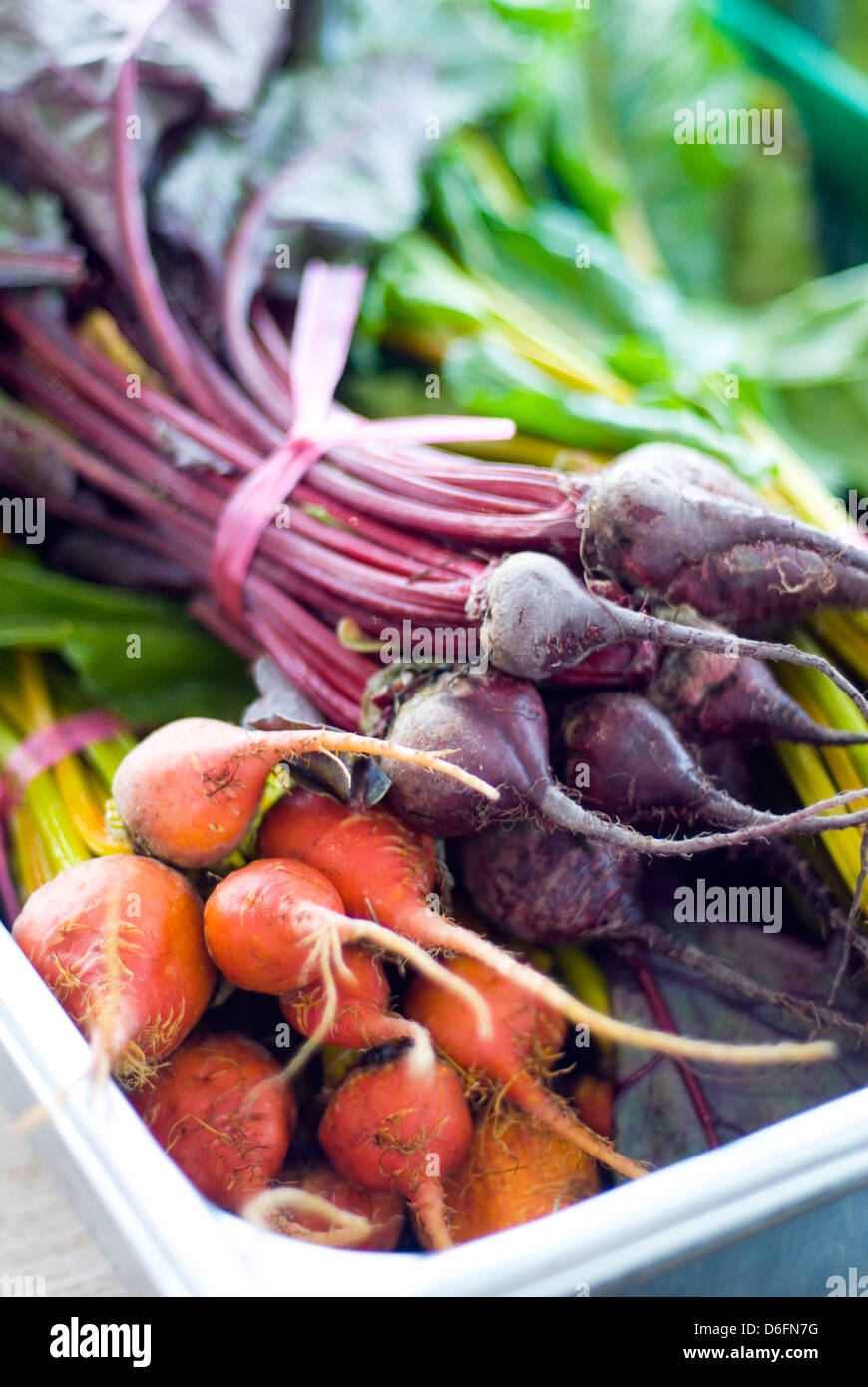 Tray of Red Beetroot and Golden Beetroot - Stock Image