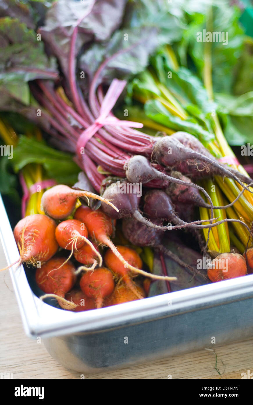 Red and Golden Beetroot - Stock Image