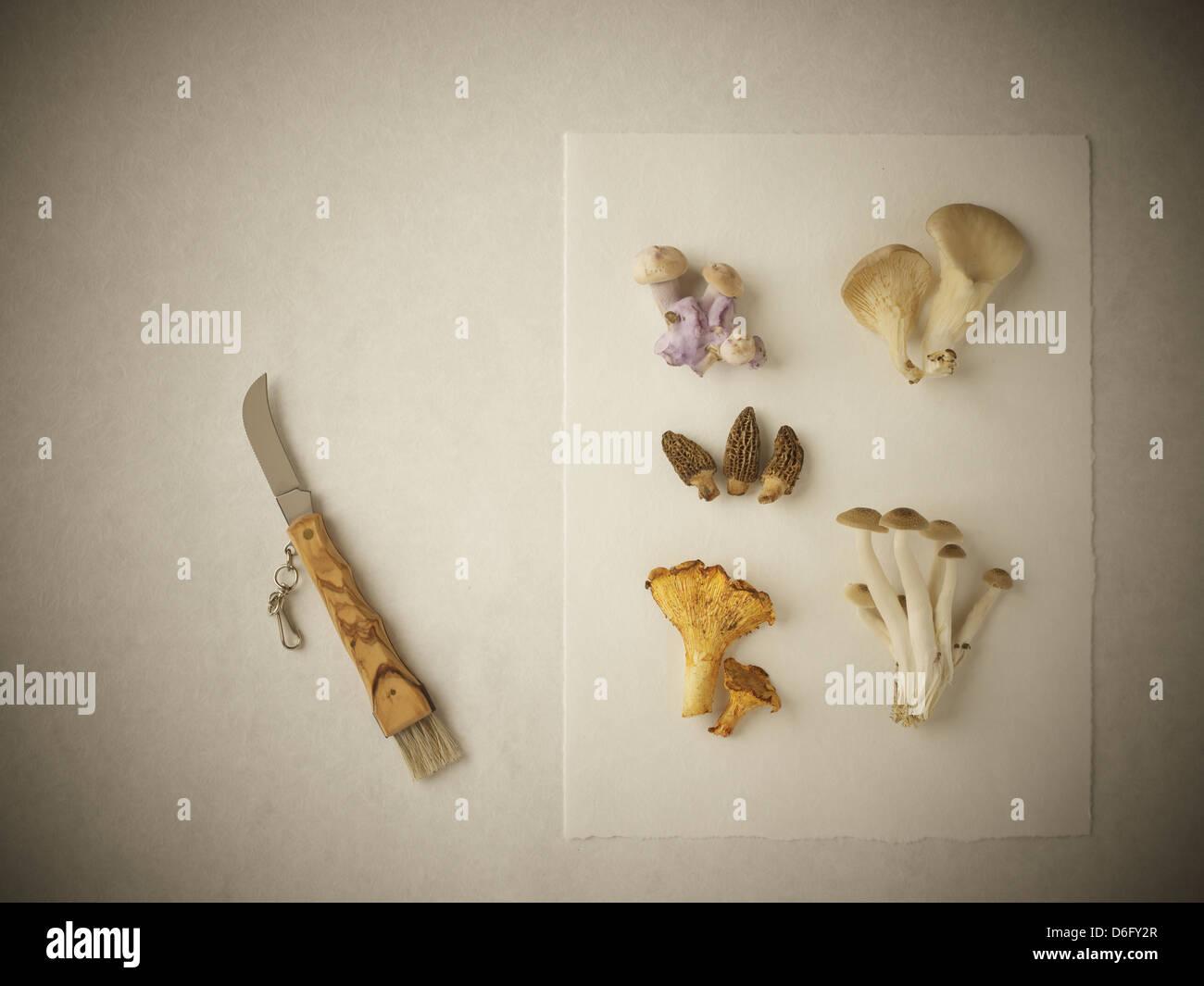 Mushrooms selection - Stock Image