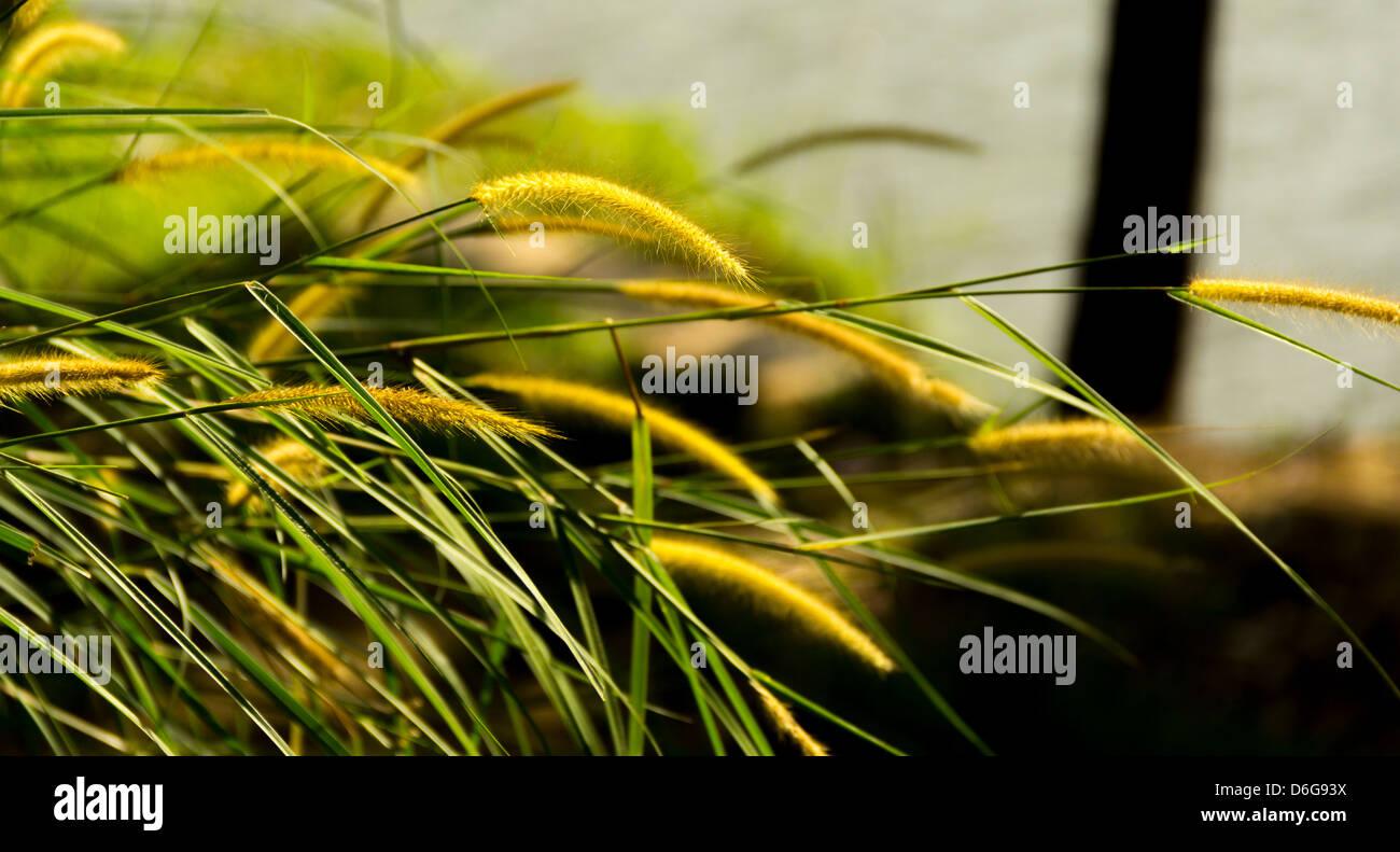 weeds,weed - Stock Image