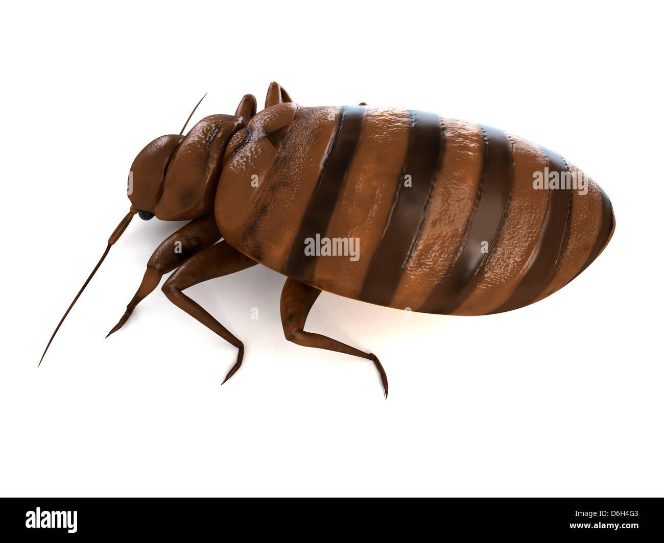 Bed bug, artwork - Stock Image