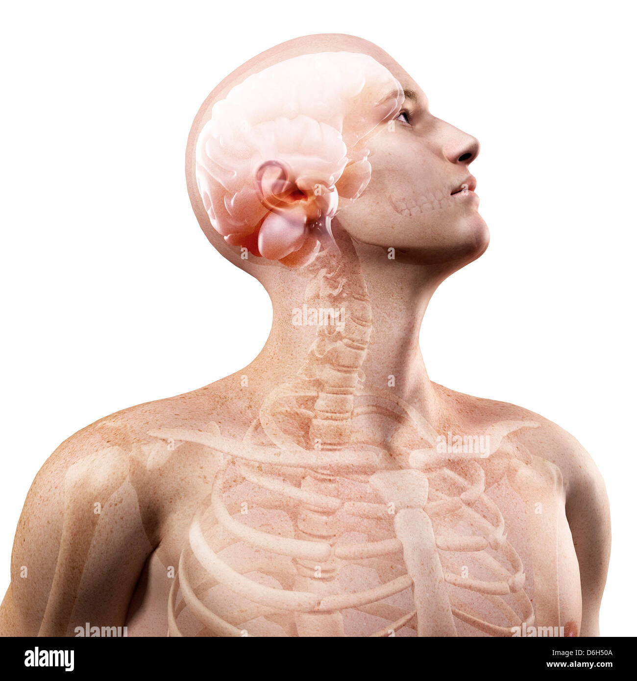 Side View Of Head And Upper Body Stock Photos & Side View Of Head ...