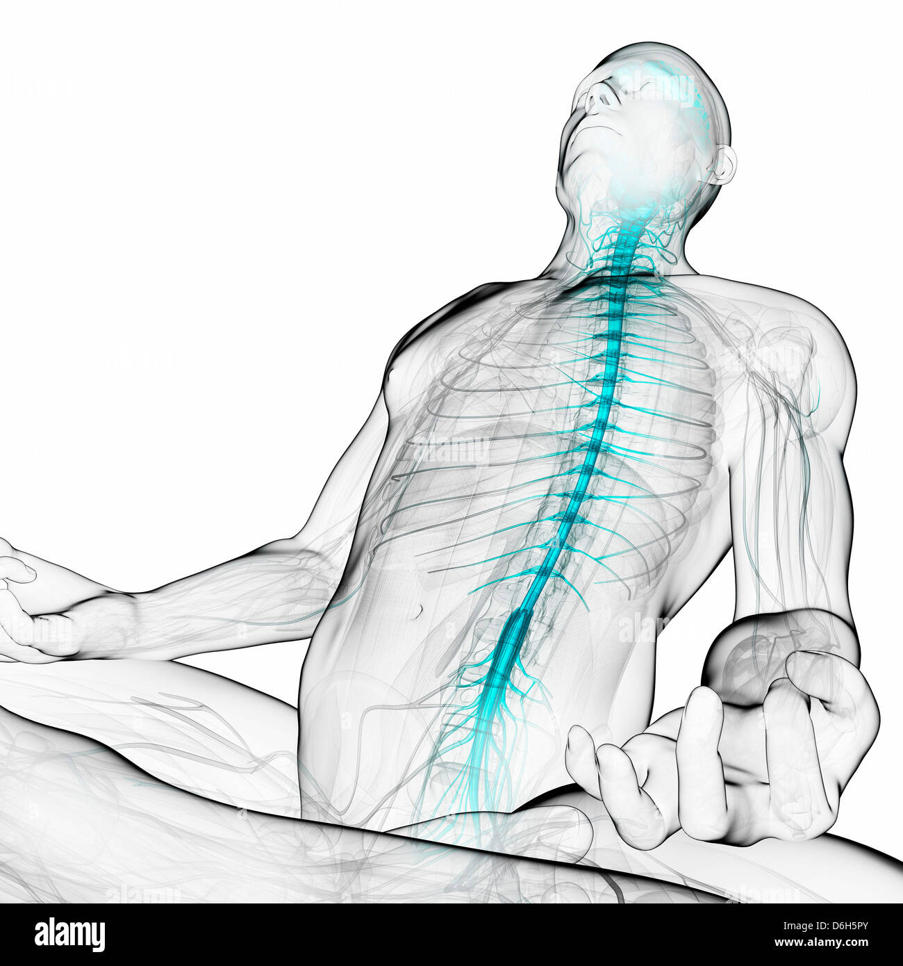 Human Spinal Cord Stock Photos Human Spinal Cord Stock Images Alamy