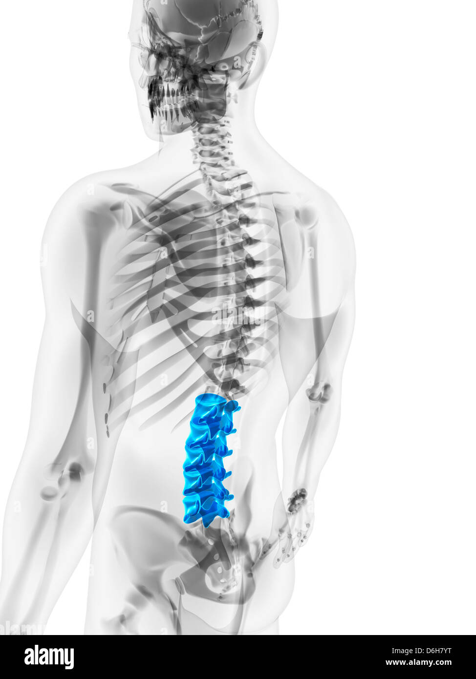 Human Lower Spine Stock Photos Human Lower Spine Stock Images Alamy