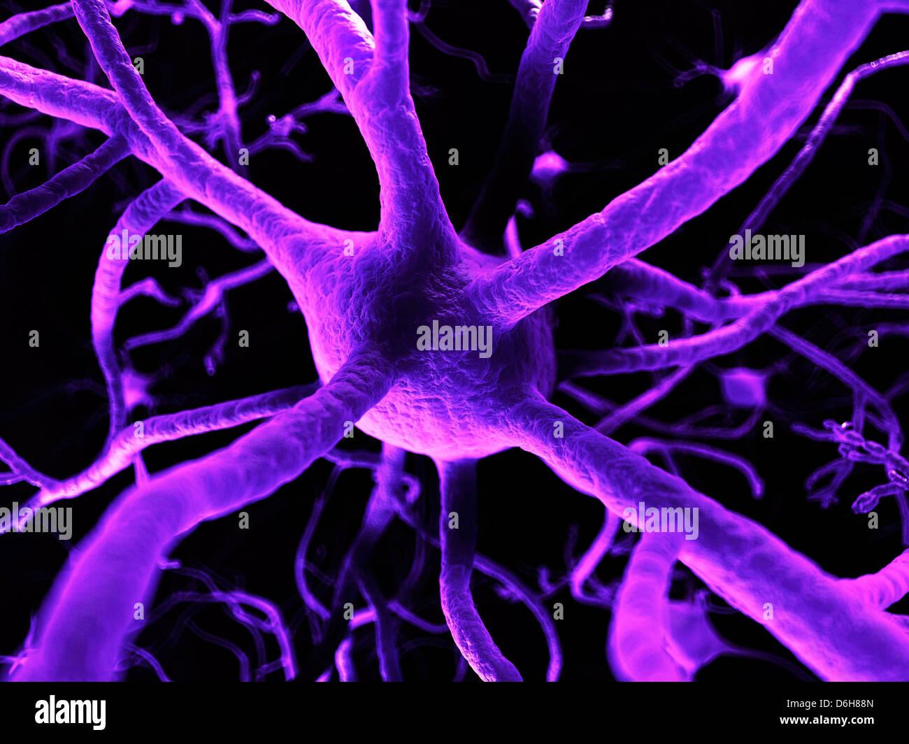 Nerve cells, artwork - Stock Image