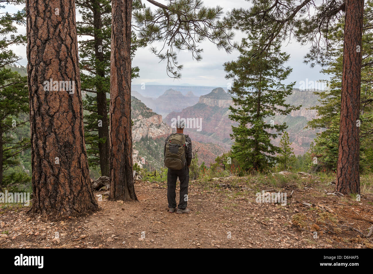 Man hiking trail in Grand Canyon Stock Photo