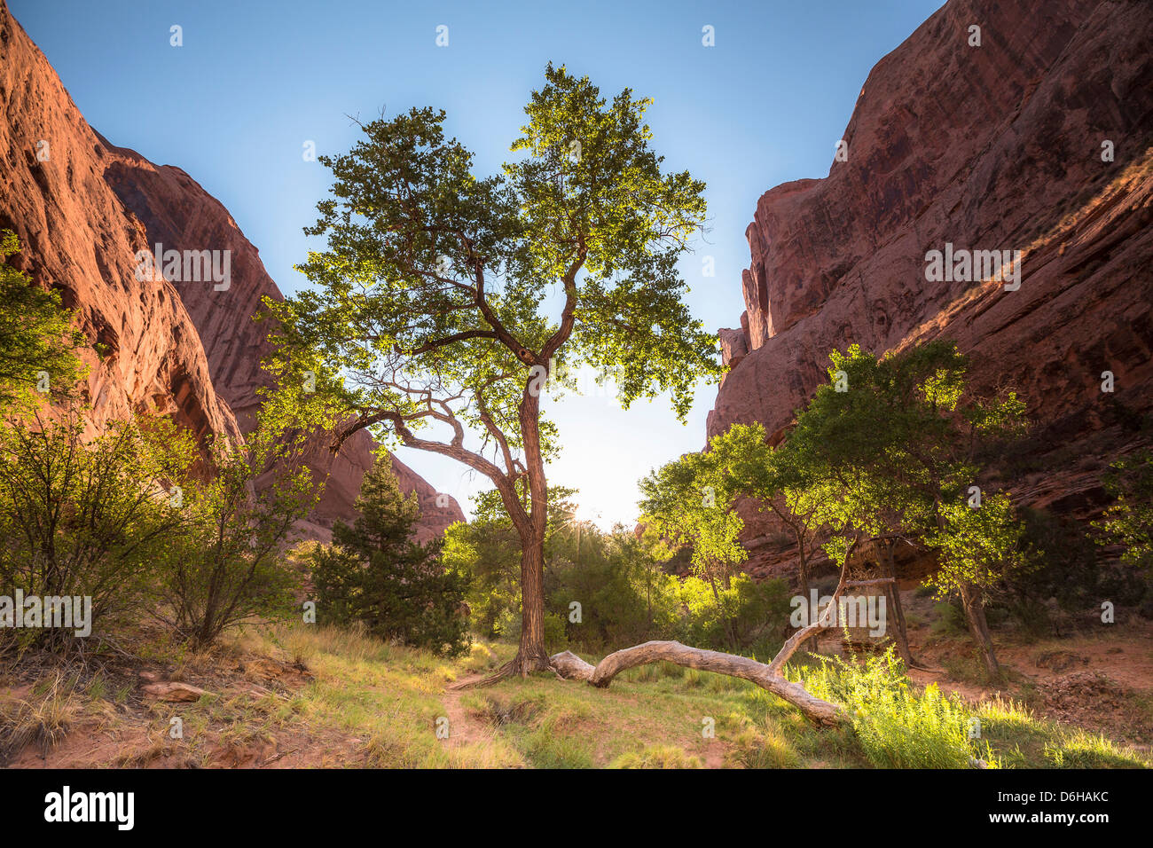 Trees growing in green valley Stock Photo
