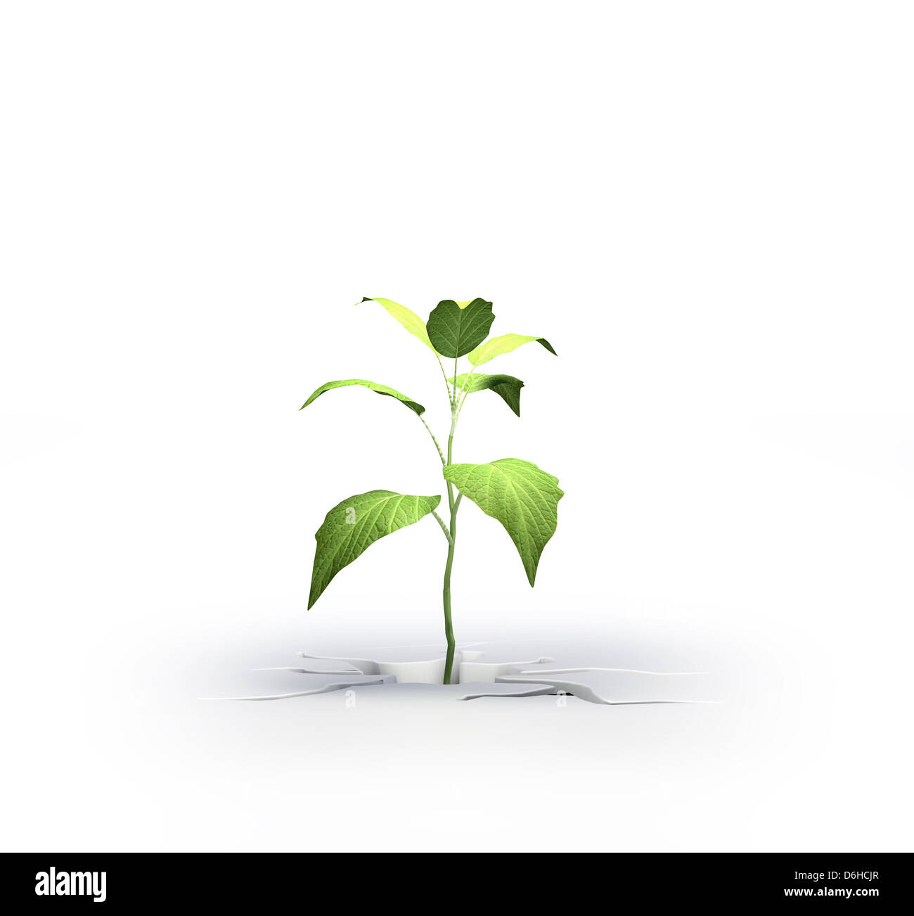 Young plant, artwork - Stock Image