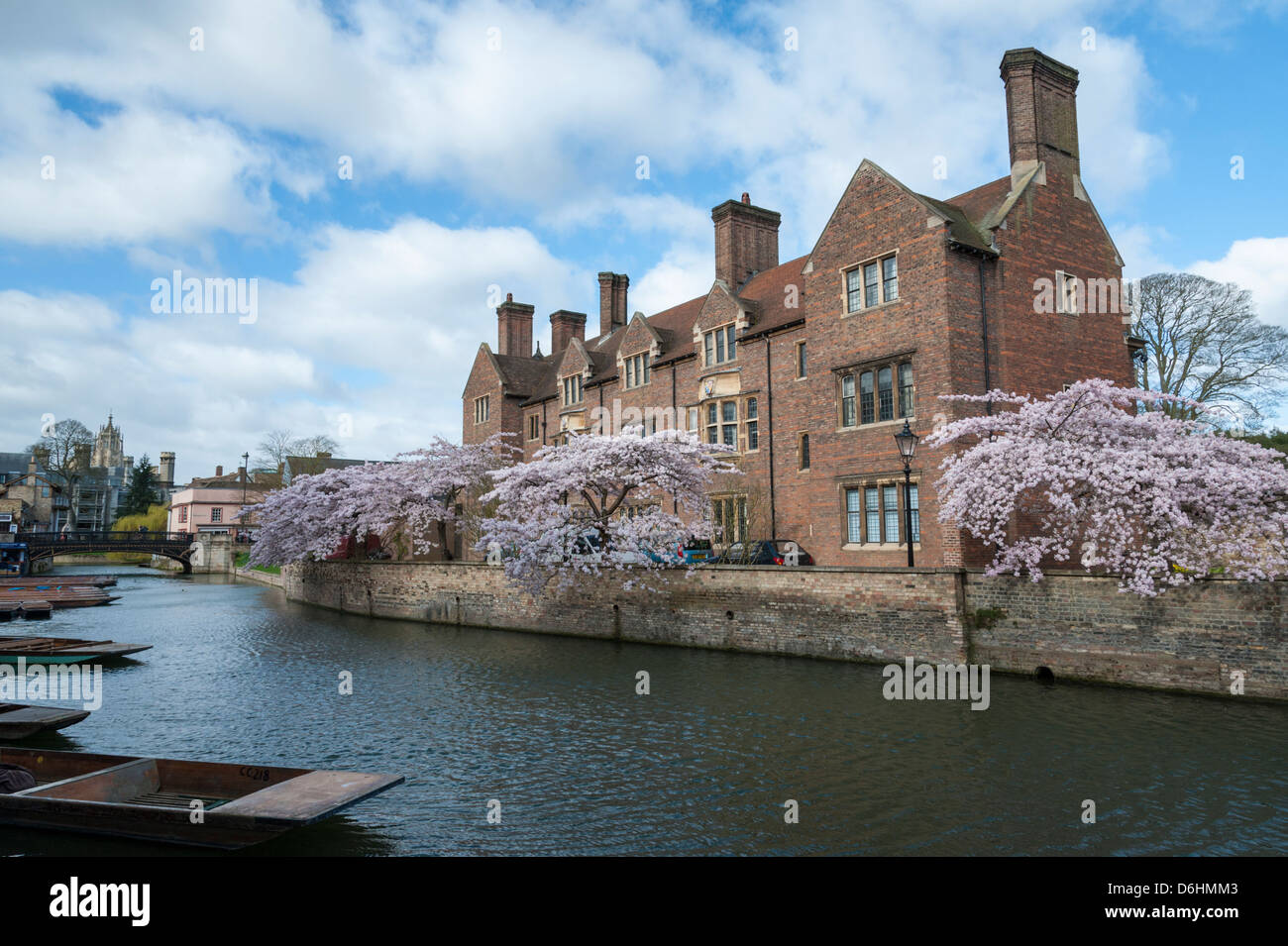 Magdelene College Cambridge UK part of Cambridge University by the River Cam with trees in pink blossom in the spring - Stock Image