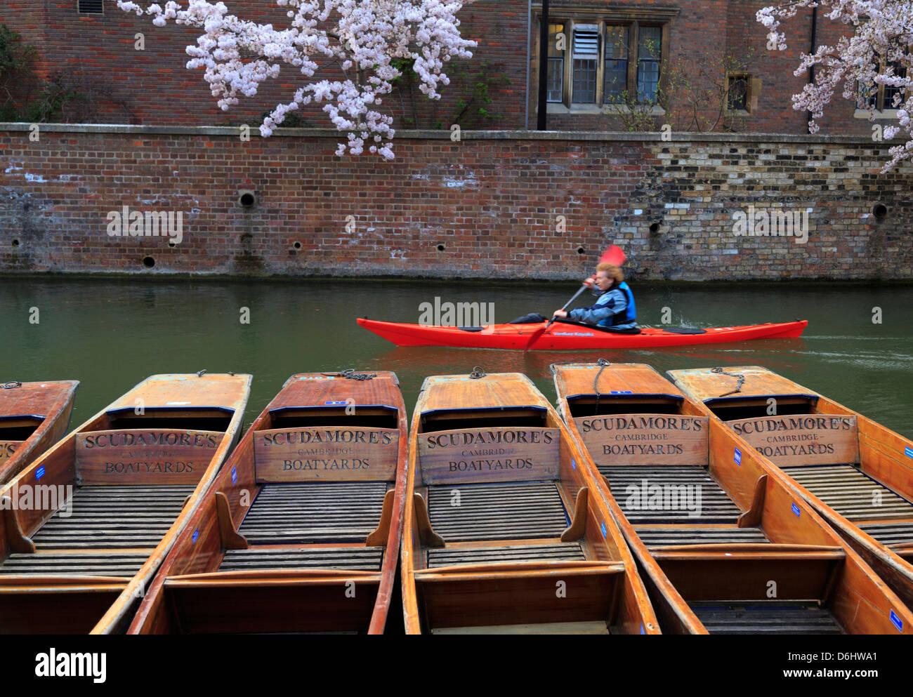 A kayaker on the River Cam moving swiftly pass Scudamore's Cambridge Boatyards - Stock Image