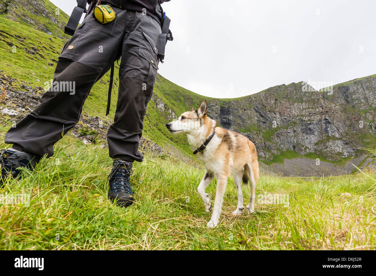 The rare, Norwegian six-toed Lundehunde, a dog used to the hunt for puffins, Vaeroya, Norway, Scandinavia, Europe - Stock Image