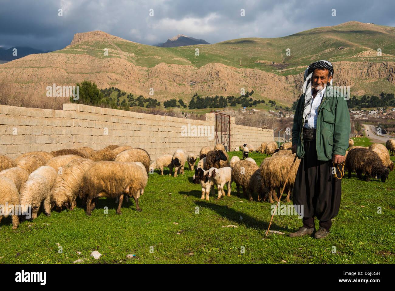 Shepherd with his herd of sheep in Ahmedawa on the border of Iran, Iraq Kurdistan, Iraq, Middle East - Stock Image
