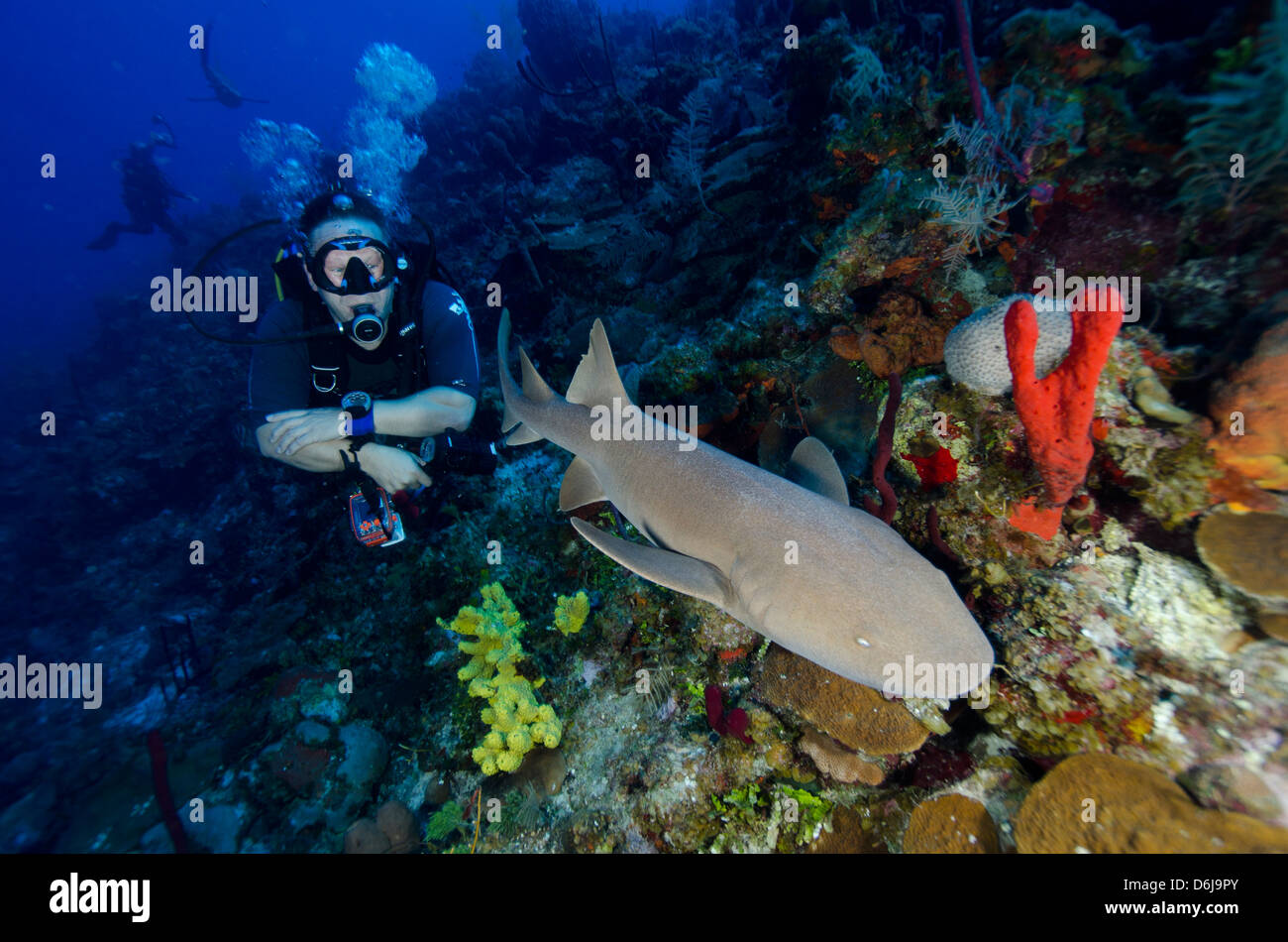 Close encounters with Nurse shark on G Spot Reef, Turks and Caicos, West Indies, Caribbean, Central America Stock Photo